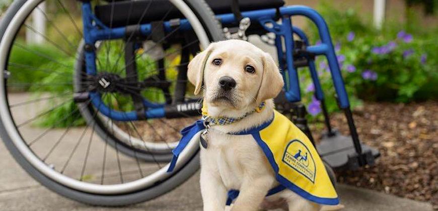 Cães de serviço e a independência como caminho para a acessibilidade