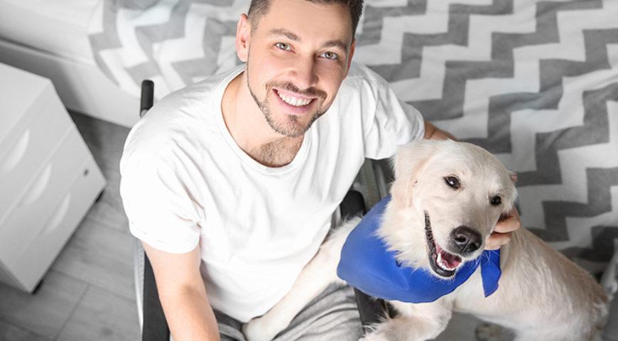 O meu pet pode virar terapeuta?